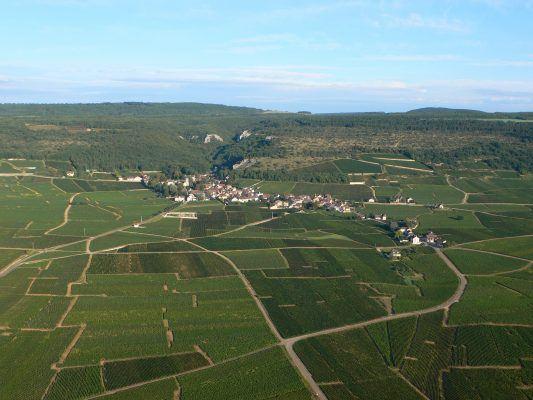 Vol en montgolfière au-dessus du camaïeu des vignes en été