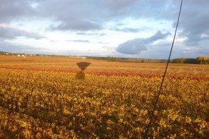 Rasez les vignes en montgolfière